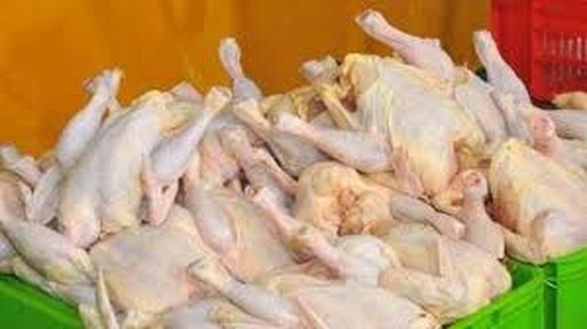 کاهش قیمت مرغ شرط دارد