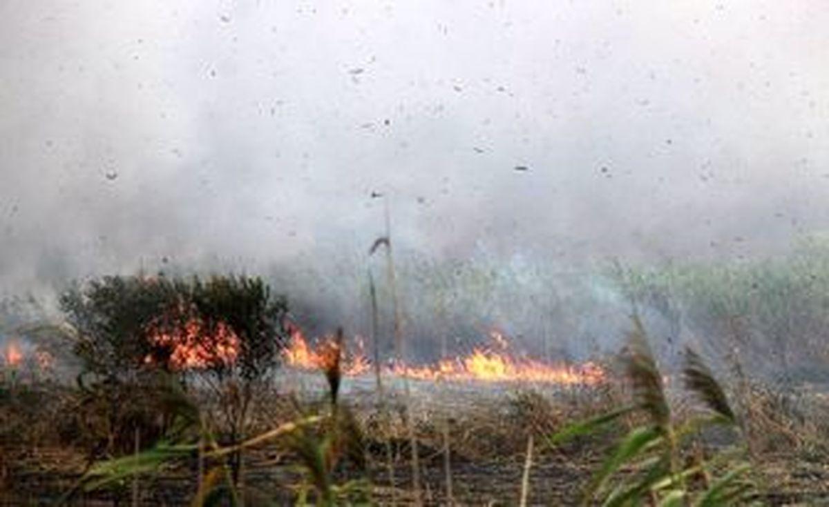 آتش سوزی تالاب بین المللی انزلی عمدی بود