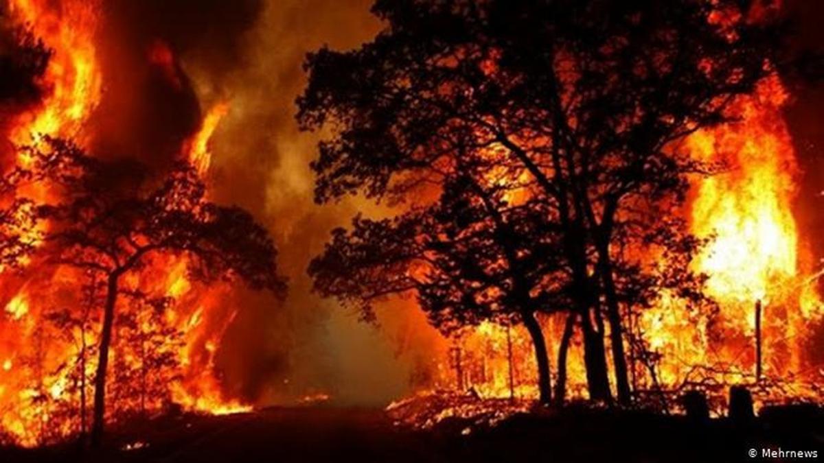 آتش دیگر در جنگلهای گچساران  زبانه کشیده     سال سیاه زاگرس تمامی ندارد