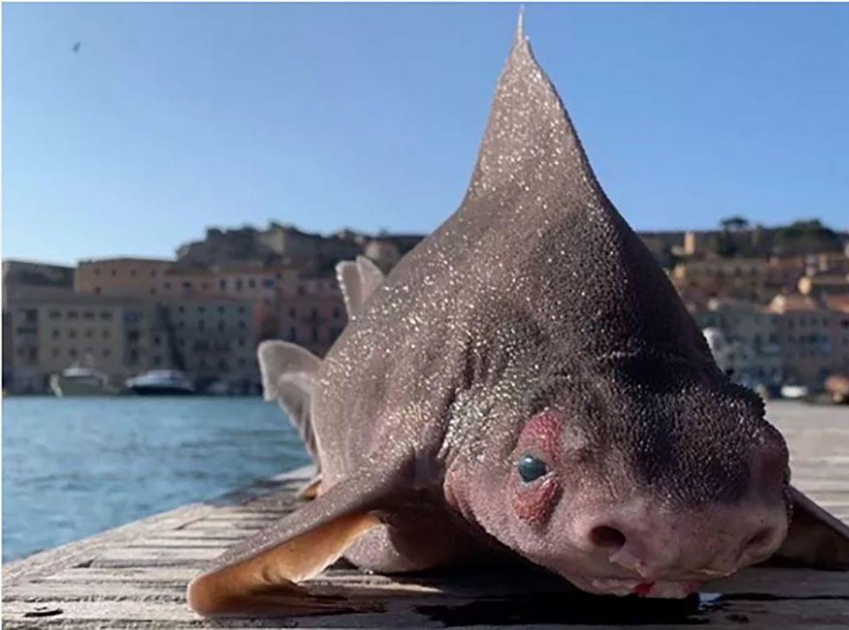 ظاهر شگفتانگیز ماهی در ساحل ایتالیا +عکس