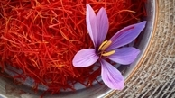 وضعیت صادرات زعفران چگونه است؟   صادرات ۱۹۰ میلیون دلاری زعفران در سال گذشته