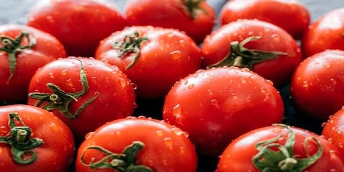 خطرات جدی مصرف بیش از حد گوجه فرنگی برای بدن | خطر گوجه فرنگی برای بدن چیست؟