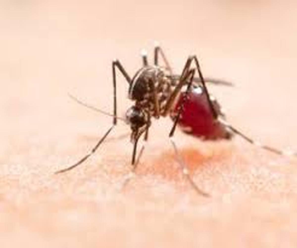 سیستان و بلوچستان؛ خطر شیوع بیماری مالاریا در سراوان | 5 نفر بیمار شدند