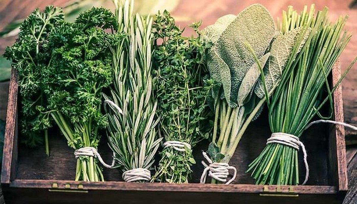 معرفی  9 گیاه دارویی برای رفع خستگی مغز