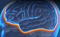 چگونه چاقی و مقاومت به انسولین موجب اختلال در عملکرد شناختی مغز میشوند