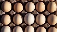 اطلاعاتی درباره  مصرف روزانه تخم مرغ