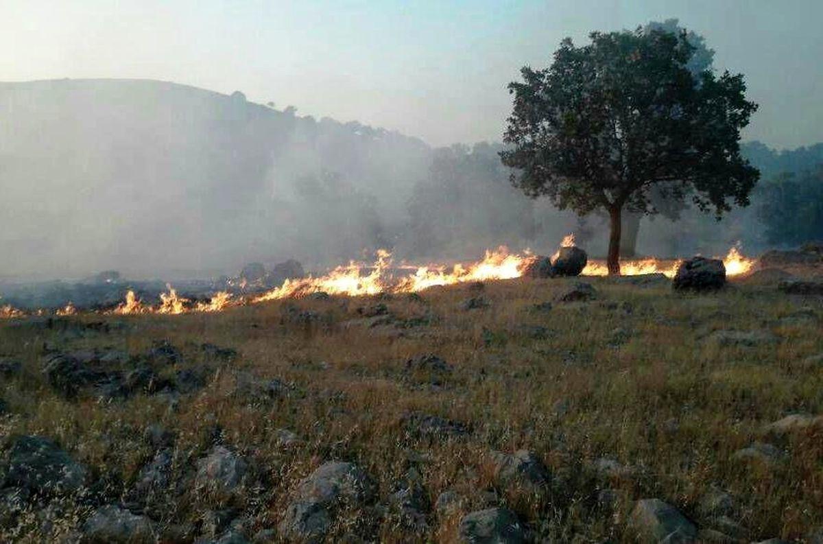 خطری جدیتر از آتشی که به جان جنگلها افتاده