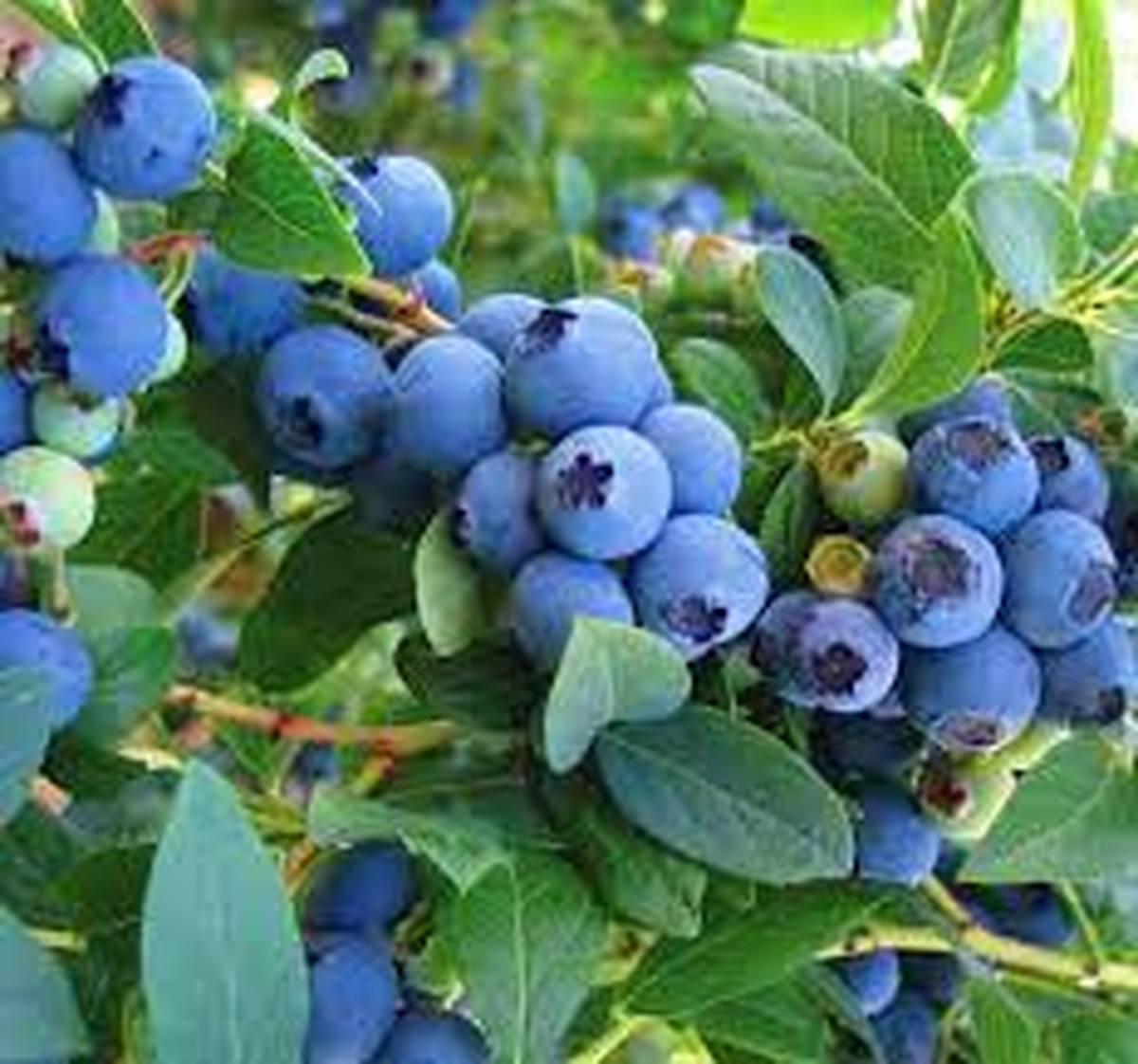 میوه ای که دربازاربه قیمت یک میلیون تومان عرضه میشود