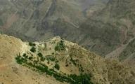 احداث جاده به قیمت نابودی ۴ هزار گونه بلوط در اصفهان