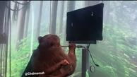 میمون کامپیوتری ایلان ماسک، در ذهنش ویدیو بازی میکند + ویدئو