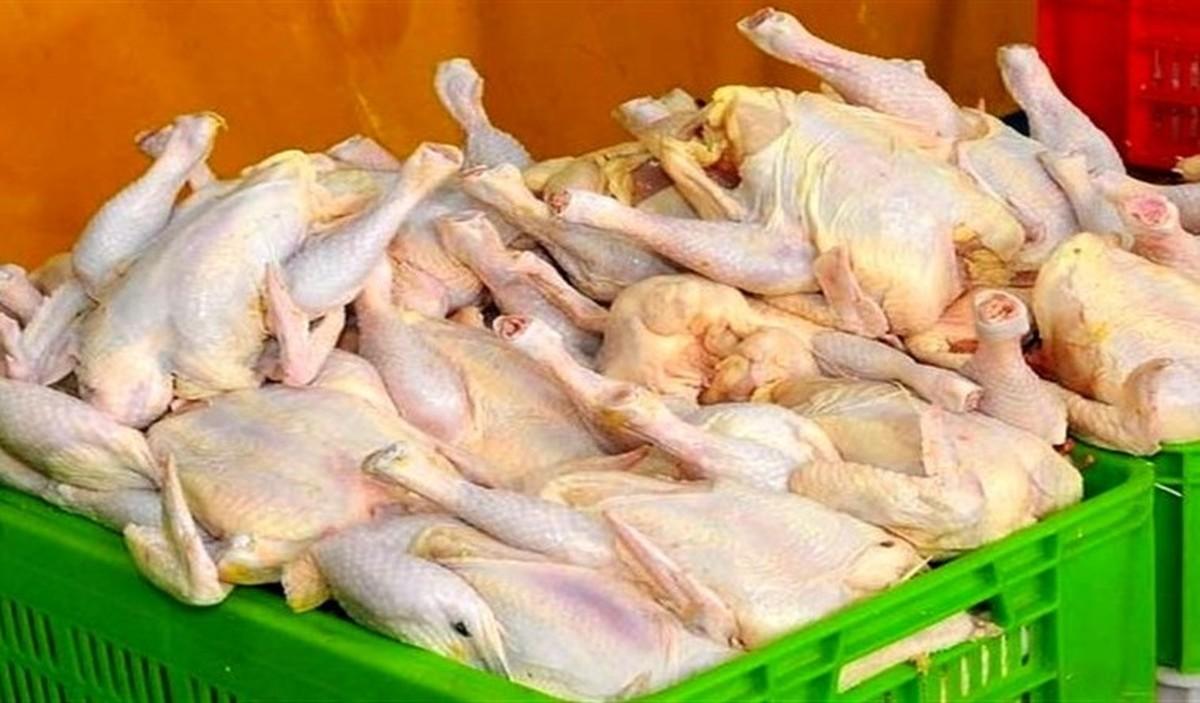 قیمت مرغ برای ماه رمضان کاهش نخواهد داشت| فروش مرغ قطعهبندی از امروز