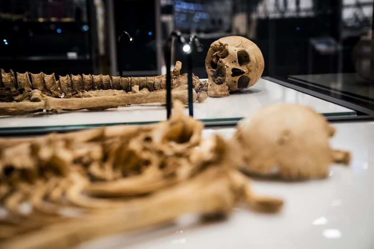 تجدید دیدار وایکینگهای خویشاوند پس از هزار سال